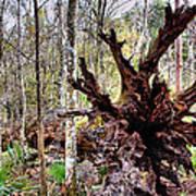 Cypress Roots Art Print
