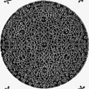 Da Vinci: Sixth Knot Art Print