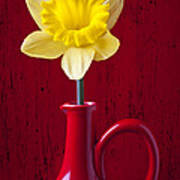 Daffodil In Red Pitcher Art Print