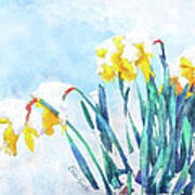 Daffodils With Bad Timing Art Print by Suni Roveto