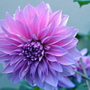 Dahlia Flower2 Art Print