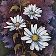 Daisies IIi Art Print