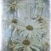 Daisy Blues Art Print
