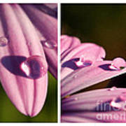 Daisy Rain  Art Print