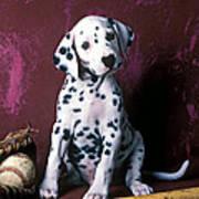 Dalmatian Puppy With Baseball Art Print