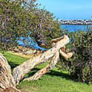 Dana Point Harbor Channel Art Print