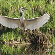 Dancing Egret Art Print