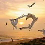 Dancing Seagulls Art Print