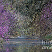 Davis Arboretum Creek Art Print by Diego Re
