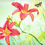 Day Lily Delight Art Print by Bonnie Barry