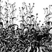 De Vries Experimental Garden Art Print