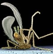 Dead Fly From Car Headlamp, Sem Art Print