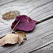 Dead Leaves Art Print