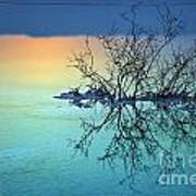 Dead Sea - Withered Bush At Dawn Art Print