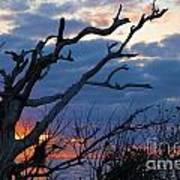 Dead Trees At Sunrise Art Print