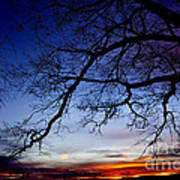 December White Oak Sunrise Art Print