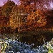 Deciduous Woods, In Autumn With Frost Art Print by The Irish Image Collection
