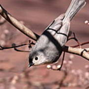 Decked Out - Tufted Titmouse Art Print