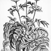 Decorative Flower Art Print