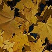 Deep Leaves Art Print