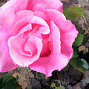 Deep Pink Watercolor Rose Blossom Art Print