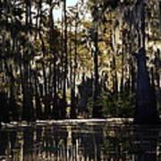 Deep Swamp Art Print