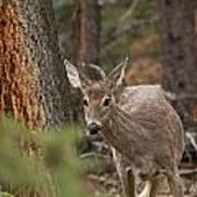 Deer 1660 Art Print