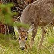 Deer 1661 Art Print