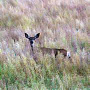 Deer Colors Art Print