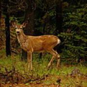 Deer Gazing  Art Print