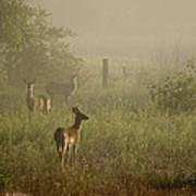 Deer In Foggy Field Art Print