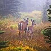 Deer In The Fog In Paradise Park In Mt Art Print