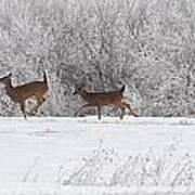 Deer Parade Art Print
