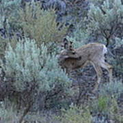 Deer Scratching Itch Art Print