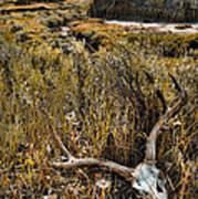 Deer Skull In Montana Badlands Art Print