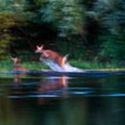 Deer Splash Art Print