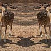 Deer Symmetry  Art Print