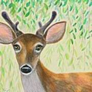 Deer Visitor Under The Willow Tree Art Print