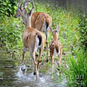 Deer Running In Stream Art Print