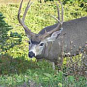Deer Without Headlights Art Print