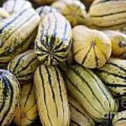 Delicata Winter Squash Art Print