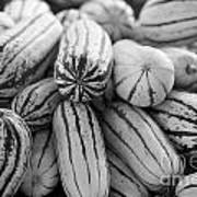 Delicata Winter Squash In Black Art Print