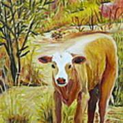 Desert Calf Art Print