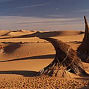Desert Luxury Art Print
