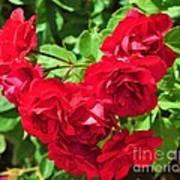 Desert Roses Art Print
