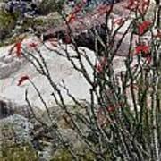 Desert Spring Art Print