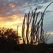 Desert Sunset Ocotillos Art Print