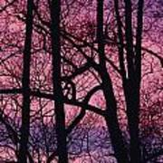 Detail Of Bare Trees Silhouetted Art Print
