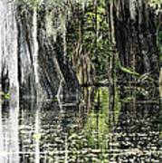Details Of A Florida River Art Print