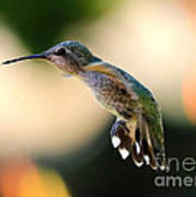 Determined Hummingbird Art Print